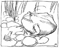 The Ox And The Frog